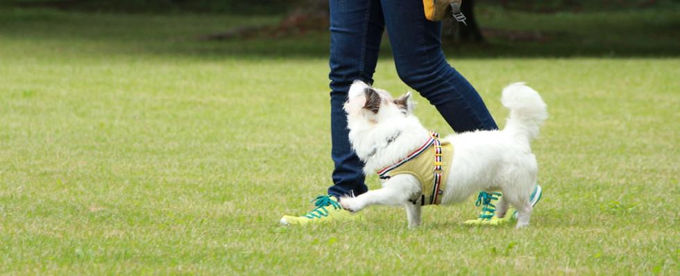 Heel-walk command training