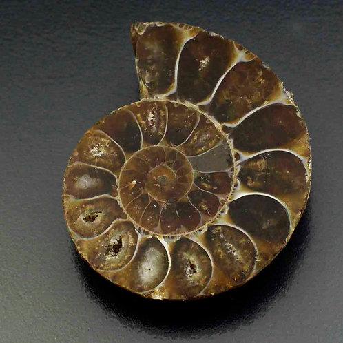Ископаемый Головоногий моллюск Аммонит 55.00 карат