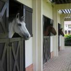 Horses at the barn.