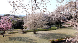 ▲相模原公園せせらぎの園地区01(4月)