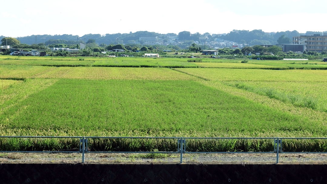 ▲南側座敷から見える田園風景01(9月)