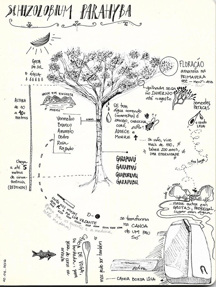 Conhecimento ecológico local sobre Garapuvu