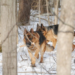 20 acres of wooded land, a dogs paradise