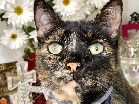 Los gatos: una amenaza para los espiritistas y sus bóvedas