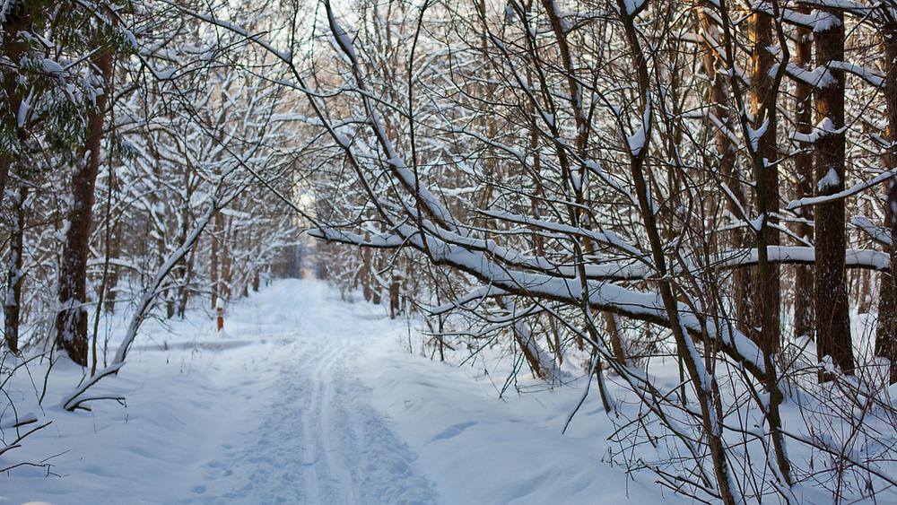 winterlicher Spaziergang Schnee