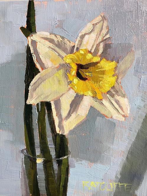Daffodil Portrait