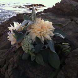 #bridalbouquet#cafeaulaitdahlia#plectranthus#ammigreenmist #farmerflorist #seasonalfloweralliance #w