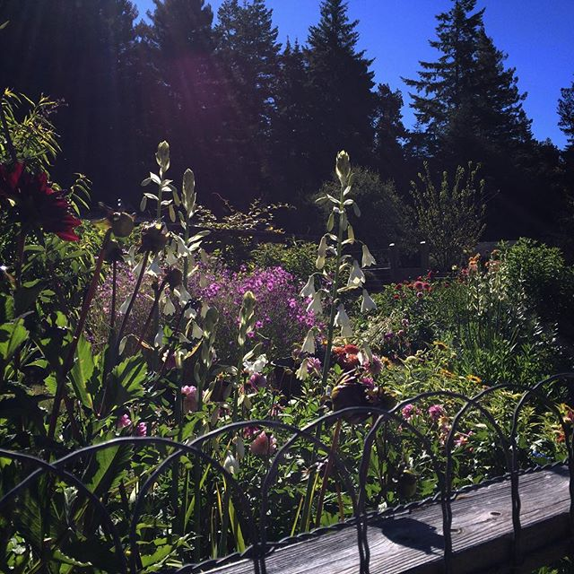 Sun shining on our cutting garden and bluest of skies in the distance. Giving thanks. ._._._._.jpg