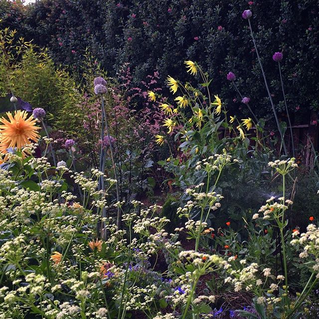 Evening light in the cutting garden. ._._.jpg