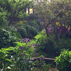 Backyard flower jungle. 🌸🌿🥀_._._.jpg