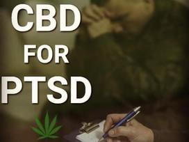 CBD Oil can help PTSD in Veterans