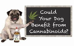 Dog's and CBD