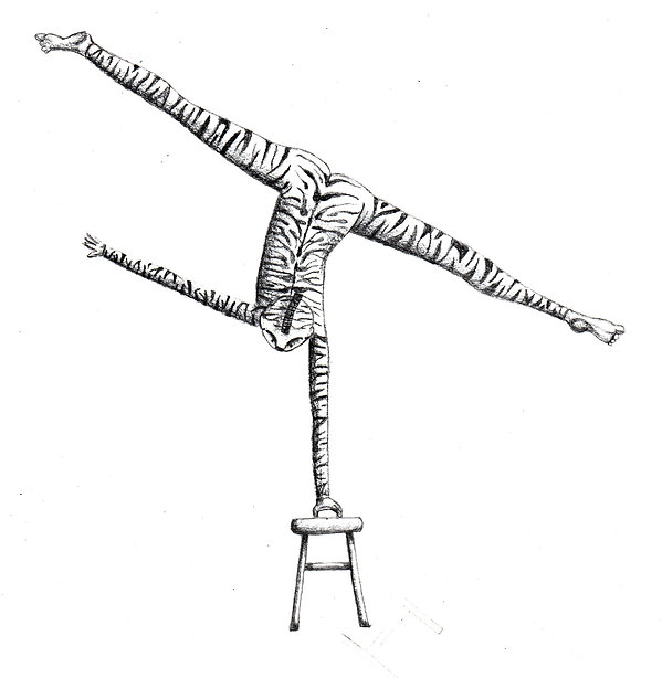 zebra contorcionista.jpg