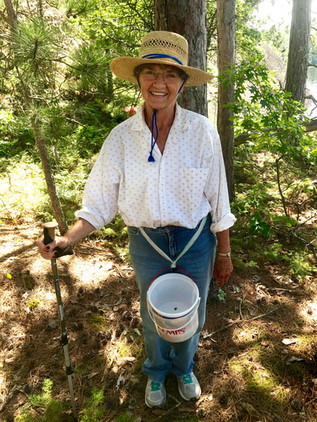 Blueberry Picking in Voyageurs National Park