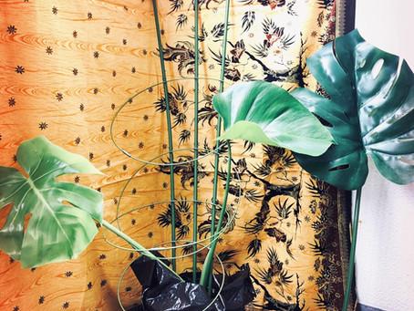 【風水】部屋の植物は「健康」や「家族・人間関係」に影響を与えている🌱