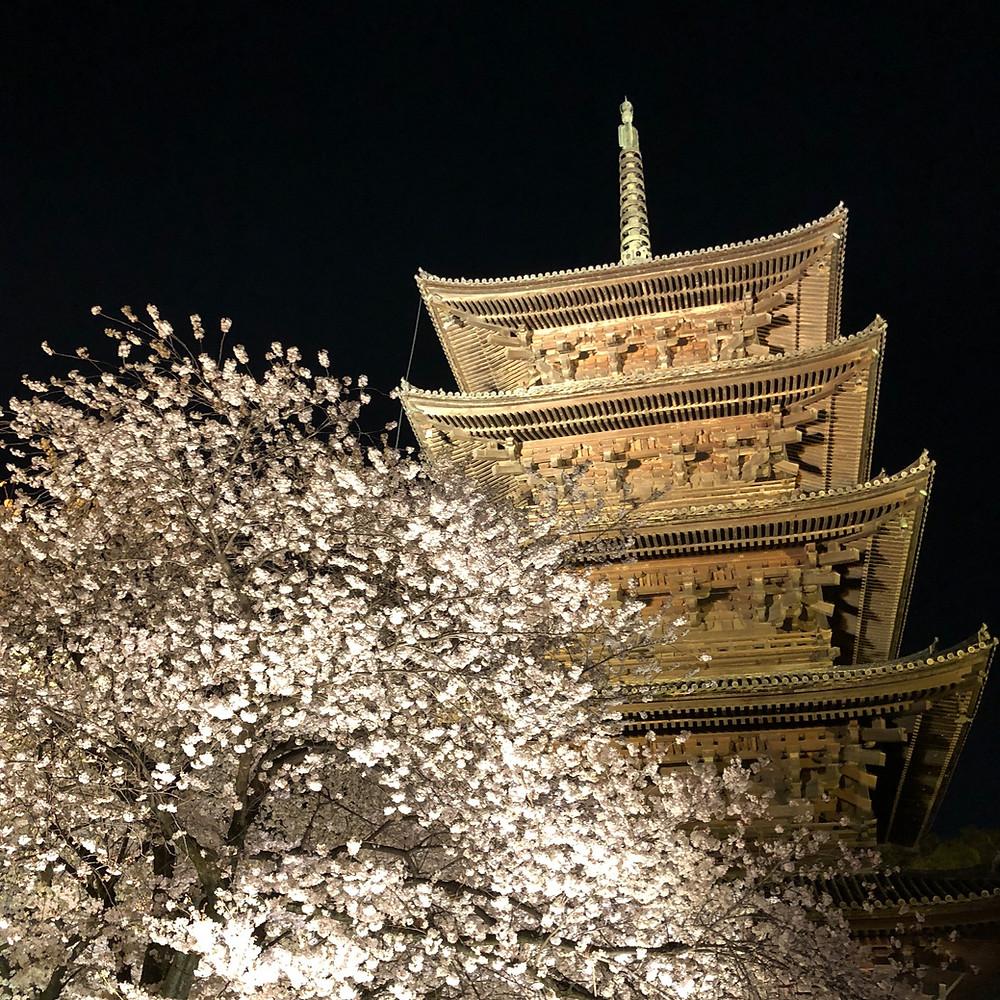 東寺の桜ライトアップ2018  桜と風水