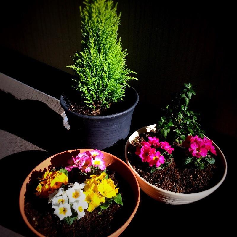 風水部屋に植物を取り入れる ベランダ風水
