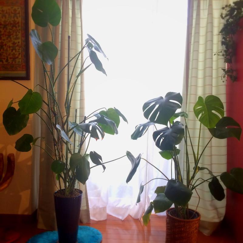 観葉植物の風水術 家族健康エリアの風水
