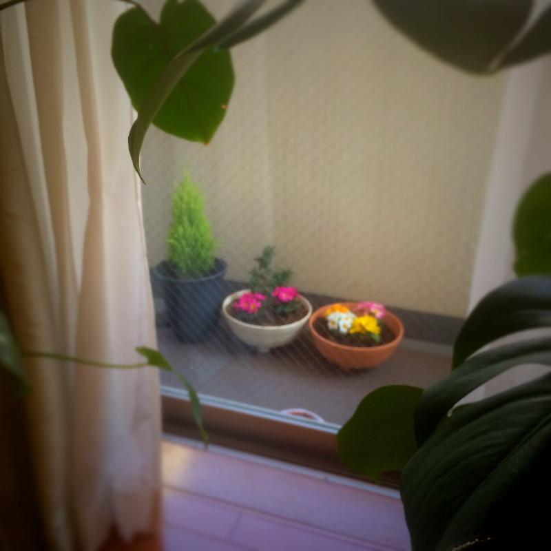 ベランダの鉢植えに関する風水