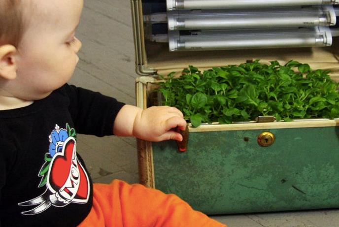 風水インテリア ミニ菜園と風水 コンテンポラリー風水 スーツケースとミニ菜園
