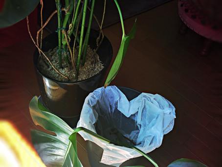 【風水】植物で私が1つ注意しているのは「鬱蒼としすぎない」こと☺️