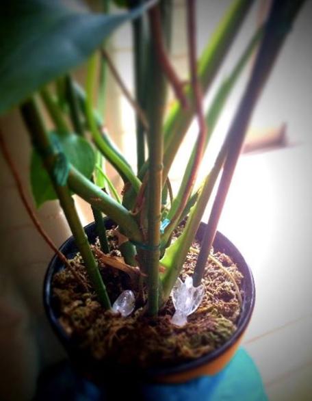 風水インテリア 観葉植物とクリスタル