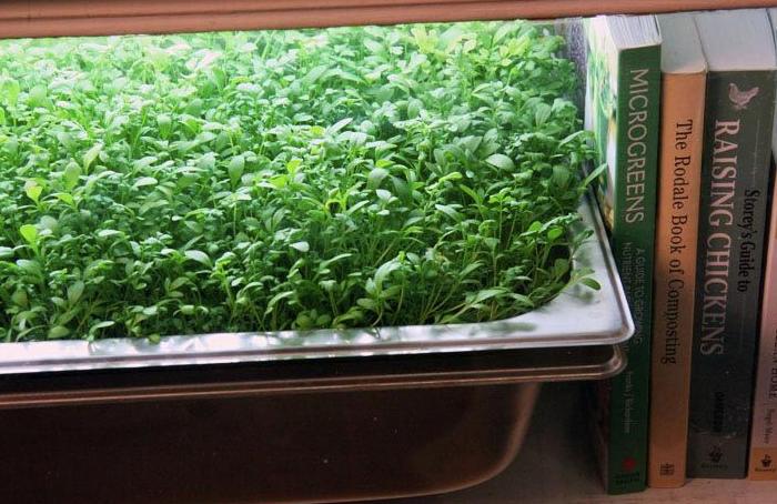 風水インテリア ミニ菜園とブックエンド コンテンポラリー風水 風水とミニ菜園