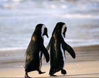 鳥は風水パワーシンボル 仲良しペンギン コンテンポラリー風水フジワラユカ