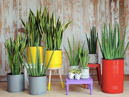 【風水】ツンツンした植物ばかり自分の周りに置かないで^-^/