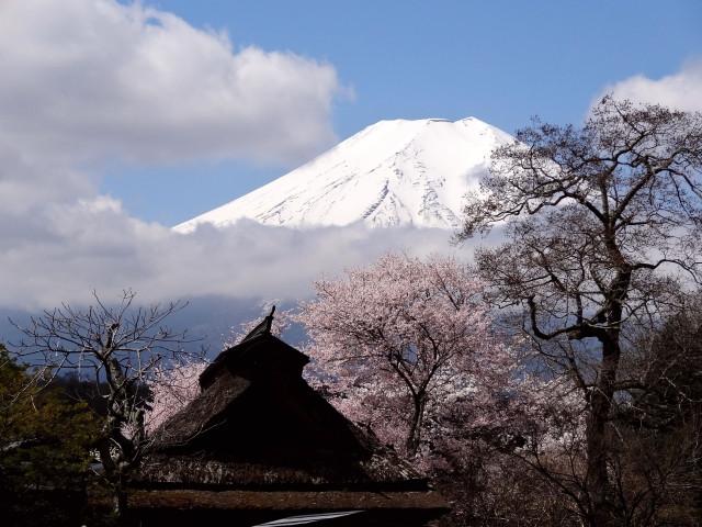 富士山と桜と風水 コンテンポラリー風水フジワラユカ