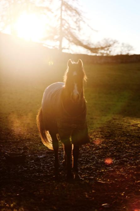 風水駿馬のシンボル コンテンポラリー風水コンサルタントフジワラユカ