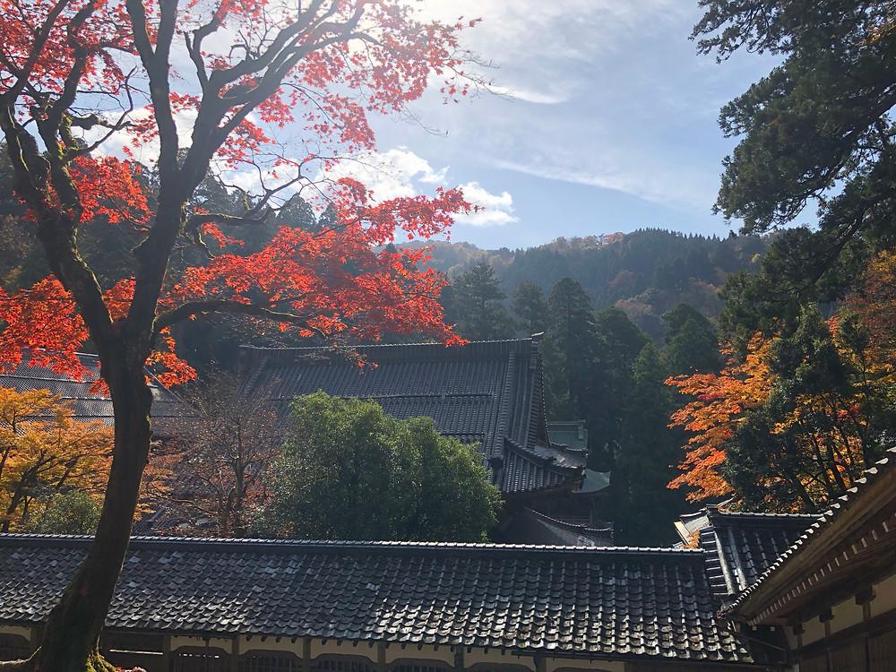 秋の永平寺 旅の風水フジワラユカ