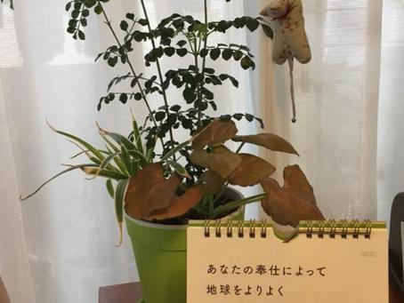 【空間に素敵な言葉を!日めくりカレンダーの風水術】