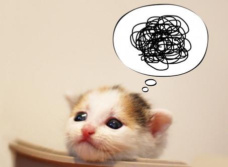 【風水】ペットのトイレはどこにおく?
