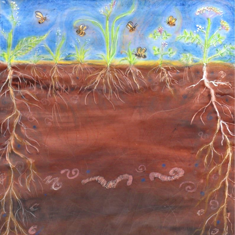 Farm walk - the importance of soil