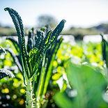 0301_Tablehurst_Farm_Garden_09.2019 cs.jpg