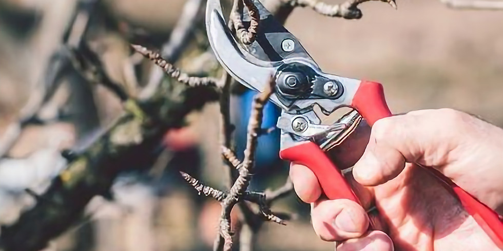 Volunteer pruning day