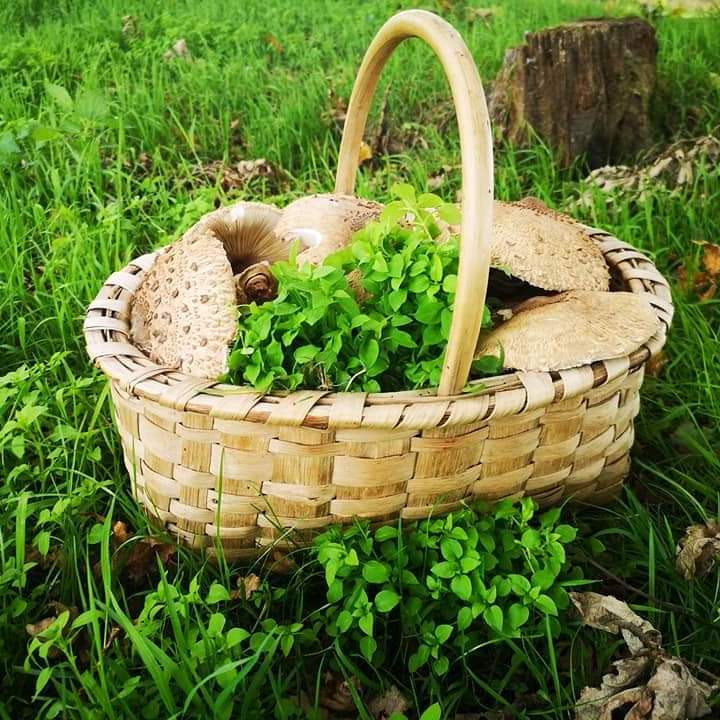 Foraging with Ashdown Forage