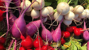 Tampa Bay Local Farms- 8 ways to buy local organic produce while maintaining social distancing