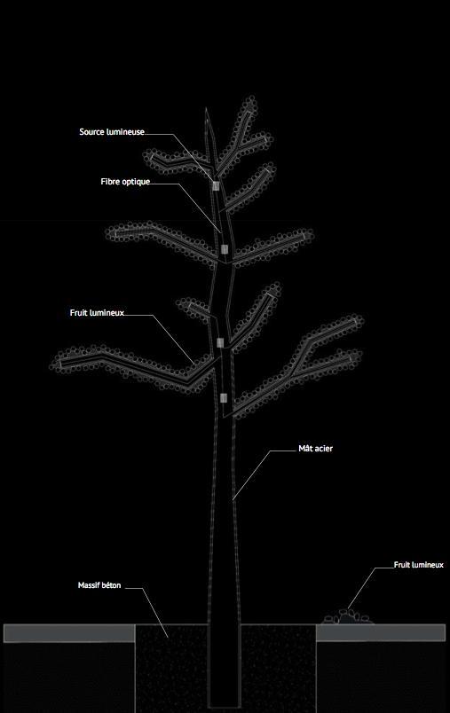 arbre lumineux coupe