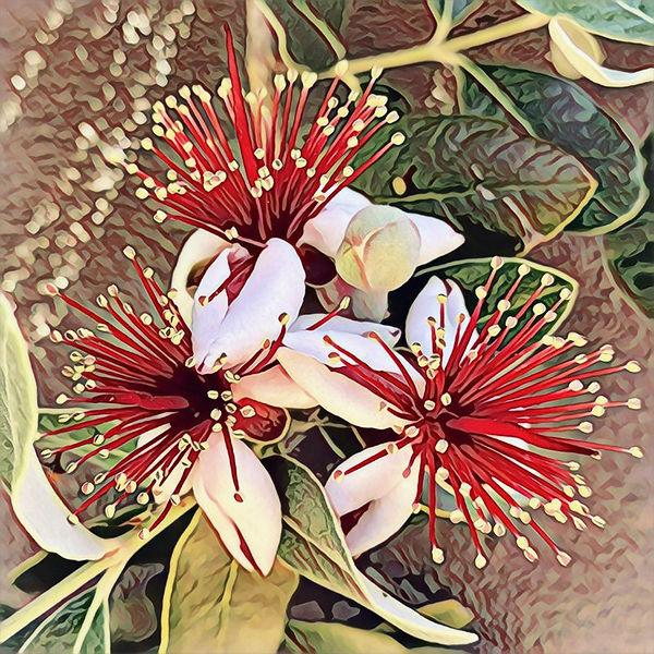 p_guava.jpg
