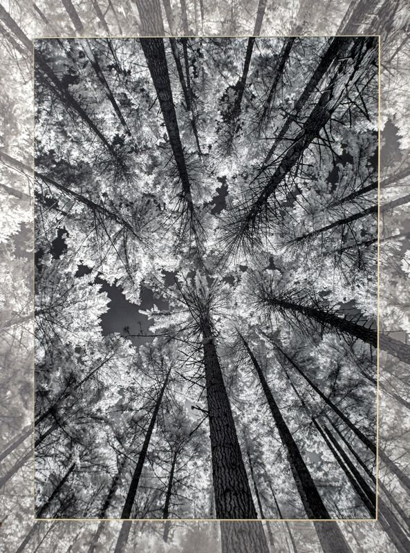 tall_timber.jpg