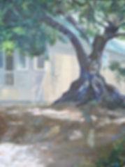 20_judy_shelton_olive_tree_on_dana_stree