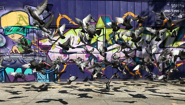 pigeons_and_graffiti.jpg