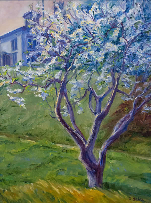 John Muir Blossoms.jpg