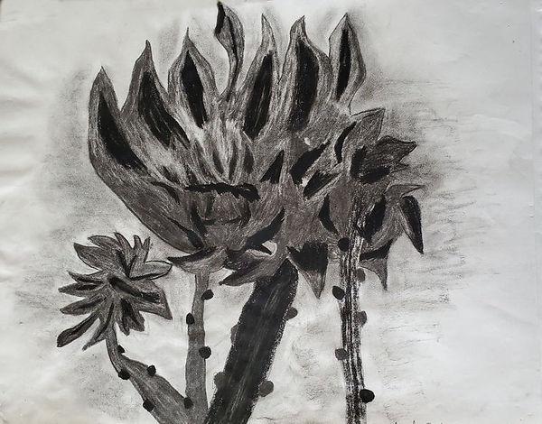 artichoke_plant.jpg