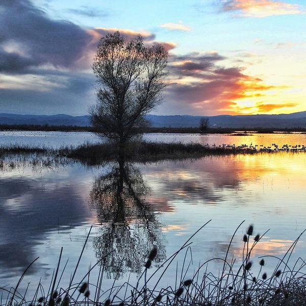 dusk_at_bird_refuge.jpg