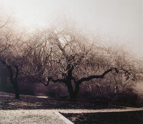 fog_at_blake_gardens.jpg