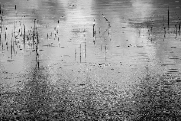 quiet_rain.jpg