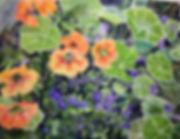 nasturiums_and_flax.jpg